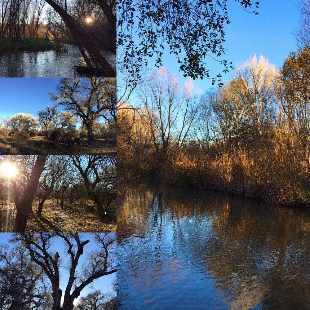 Sun water trees. Arizona.